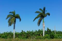 Tropisches Ackerland Lizenzfreie Stockbilder