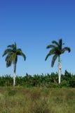 Tropisches Ackerland Lizenzfreie Stockfotos