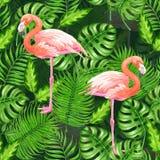 Tropisches Aquarell des Flamingos vektor abbildung