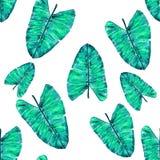 Tropisches Blatmuster Grünes Blatt monstera nahtlos stockbilder