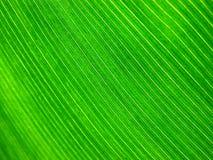 Tropisches Blatt Lizenzfreies Stockbild