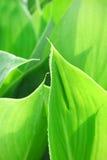 Tropisches Blatt Stockfotografie
