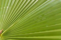 Tropisches Blatt Lizenzfreie Stockfotografie