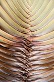 Tropisches Blattdetail Stockfotos