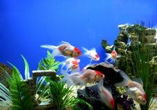 Tropisches Blau Lizenzfreies Stockfoto