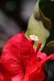 Tropisches Blumenmakro Stockfotografie