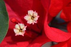Tropisches Blumenmakro Lizenzfreie Stockfotografie