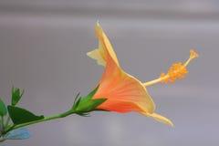 Tropisches Blumenmakro Lizenzfreies Stockfoto