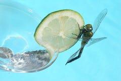 Tropisches Cocktail Stockfotografie