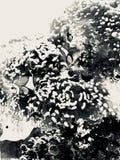 Tropisches Fischaquarium mit einem Weinleserand stockfoto