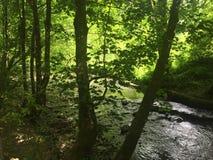 Tropisches Forrest lizenzfreie stockbilder