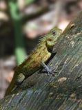 Tropisches Geschöpf Stockbild