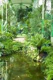 Tropisches Gewächshaus Stockbild