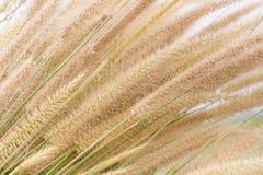 Tropisches Gras für Hintergrund stockfotografie