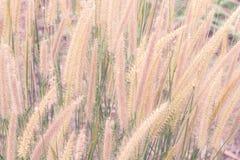 Tropisches Gras für Hintergrund stockfoto