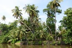 Tropisches Haus in den Palmen auf dem Fluss Stockfoto