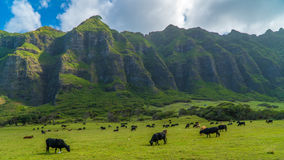 Tropisches Kahana-Tal Lizenzfreies Stockfoto