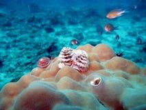 Tropisches Klimameeresflora und -fauna Unterwasser stock abbildung