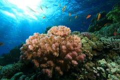 Tropisches Korallenriff Lizenzfreie Stockbilder