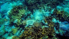 Tropisches Korallenriff, das unter Wasser auf Stein wächst lizenzfreie stockfotografie