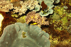 Tropisches Marineriff mit Korallen und Fischen Lizenzfreie Stockfotografie