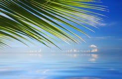 Tropisches Meer mit Palmen Stockfoto