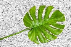 Tropisches Monstera-Blatt in einem Haufen des zerrissenen Papiers Lizenzfreie Stockfotografie