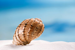 Tropisches Muschelseeoberteil mit Ozean, Strand und Meerblick Stockfotos