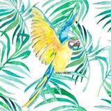 Tropisches nahtloses Muster der Vögel und der Anlagen Aquarellvektor Transparenter Hintergrund Stockbild