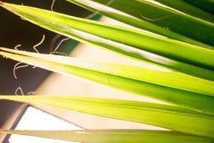 Tropisches Palmblatt im Makrobild mit abstrakten Linien Stockfotografie