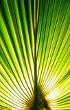 Tropisches Palmblatt im Makrobild mit abstrakten Linien Lizenzfreies Stockbild