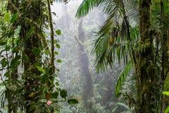 Tropisches Palmblatt-organisches Hintergrund-Foto Stockfotografie