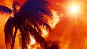 Tropisches Palme-Paradies stock video