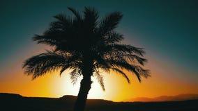Tropisches Palme-Schattenbild auf Sonnenuntergang-Hintergrund und Entwürfen der Berge stock video footage