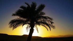 Tropisches Palme-Schattenbild auf Sonnenuntergang-Hintergrund und Entwürfen der Berge stock video