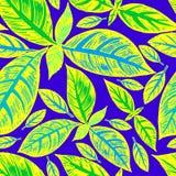 Tropisches Palmenmuster des nahtlosen Vektors stock abbildung