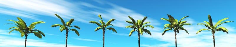 Tropisches Panorama, der Sonnenuntergang und Palmen Stockfotos