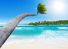 Tropisches Paradies Stockfoto