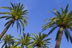 Tropisches Paradies Lizenzfreies Stockbild