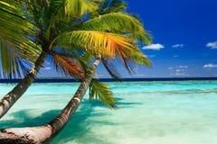 Tropisches Paradies bei Maldives lizenzfreie stockbilder