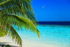 Tropisches Paradies bei Maldives stockfotografie