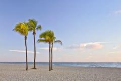 Tropisches Paradies in Miami Beach Florida mit Palme Lizenzfreies Stockbild