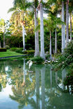 Tropisches Paradies mit Reihern Lizenzfreies Stockbild