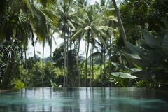 Tropisches Pool Lizenzfreie Stockfotos