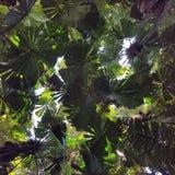 Tropisches Regenwald-Kabinendach Lizenzfreie Stockfotografie