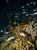 Tropisches Riff u. Fische stockbilder