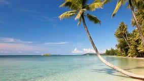 Tropisches Seeufer mit Palmen auf dem Strand stock footage