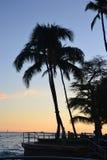 Tropisches sillhouette Lizenzfreie Stockbilder