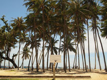 Tropisches Strandband Stockbild