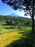 Tropisches Tal mit Reisterrassen und -bäumen Stockfotos
